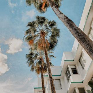 Dernier dimanche avant la réouverture des terrasses !! On espère la même météo que celle de Miami pour mercredi 🌴🌞 ⠀⠀⠀⠀⠀⠀⠀⠀⠀ ⠀⠀⠀⠀⠀⠀⠀⠀⠀ #sunday #coffee #coffeelover #sun #miami #goodvibes #weekend #chill #art #creation #coffeeshop #paris #feelgood #coffeetime #enjoy #kalkcoffeeshop #color #colorful #goodmood #architecture #design #palmtrees #nature #greenlife #paper #lover #diy